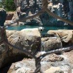 ABQ BioPark Zoo Foto