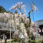 Photo of Ono-ji Temple