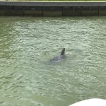 Foto de Island Time Dolphin and Shelling Cruises