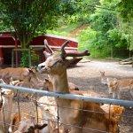 Sitka deer pen you can walk in.