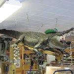 B&C Seafood Gift Shop Gator