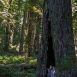 Inside a sequoia