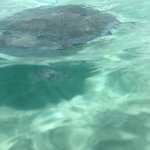 Foto de Stingray City