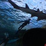 Foto de Ripley's Aquarium