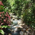 Foto de Diamond Botanical Gardens