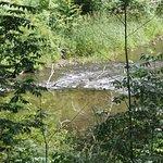 trail area
