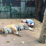 Photo de Tiger Kingdom