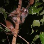 婆羅洲自然小屋照片