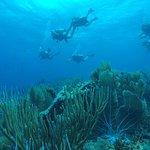 George School scuba divers over Turtle City.