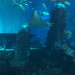 Foto di The Lost Chambers Aquarium