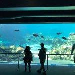 Sea World Foto