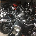 Some of the Harleys on display