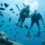 diving around Turtles' Point, North of Gili Meno, one of our favorite dive-sites