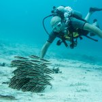 no age-limit for a Discover Scuba Diving experience