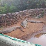 Views from the Kwena Crocodile Farm for a feeding show