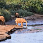 Elephants would come to the river to drink