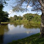 Pond in the grounds of Avani