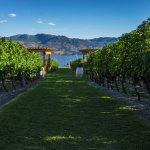 Photo de Old Vines Restaurant