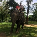 Photo of Taweechai Elephant Camp