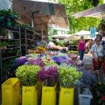 Sienna market