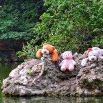 Peluches en el estanque del campo grande