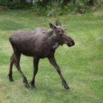 Wildlife in the backyard