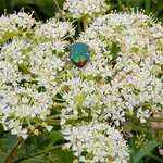 A happy beetle