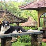 Sarinbuana Eco Lodge Foto