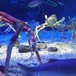 Big Crabs, science fiction like