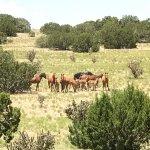 New Mexico Jeep Tours Foto