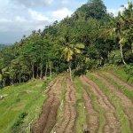 @bukit jambul (crested hill) on Besakih and East Bali Tour