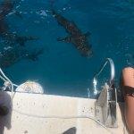 Shark site