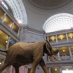 National Museum of Natural History Foto