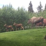 Moose and twins in yard