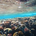 Typical view of coral in shallow water on one of our snorkeling trips