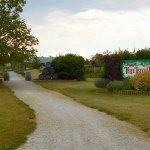 Photo de Pelee Island Winery