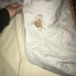 this photo is of dried vomit on our blanket