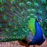 Cataract Gorge Reserve Foto