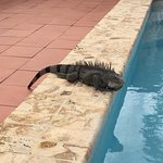 Local friend, who just loves the pool as much as the guests
