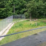 The zebra enclosure next to the zebra enclosure. Chainlink fences..