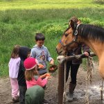 Staff will give kids carrots and apples to feed the horses.