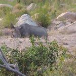 Kruger National Park Foto