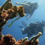 Diving Planet Foto