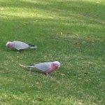 we saw many different wild birds