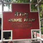 Photo of Snake Farm (Queen Saovabha Memorial Institute)