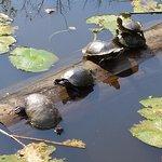 Foto de Houston Arboretum & Nature Center