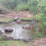 Reserva El Chato Foto