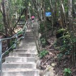 The steep steps of the nature trail leading to skybridge
