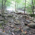 river bed in campground