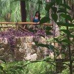 area de jardines del hotel gran mayan